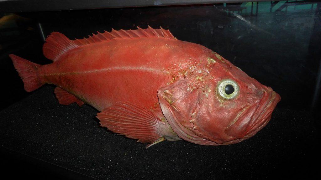 Best Electric Fillet Knife For Redfish